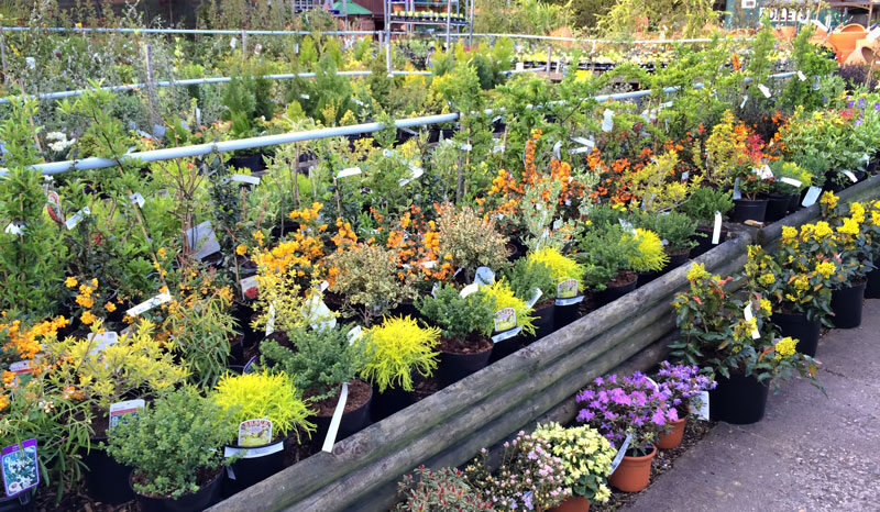 Outdoor plants from waterways garden center