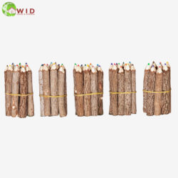 Small Twig Coloured Pencils Set