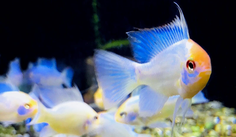 Tropical fish at waterways Garden Center