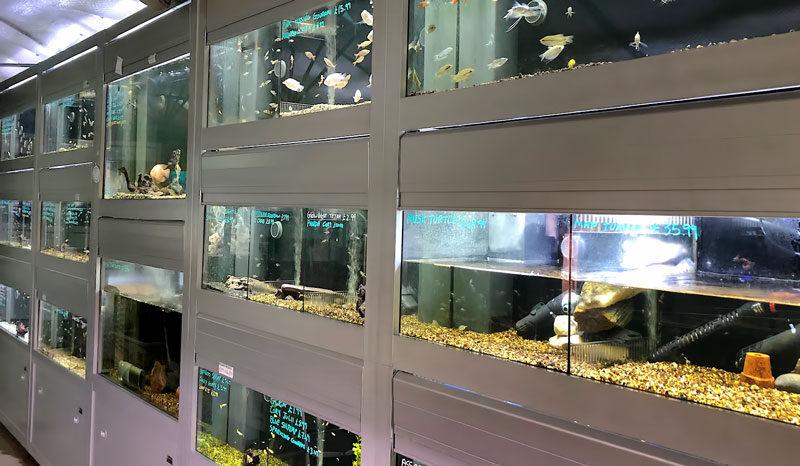 Fish, accessories and Reptiles, Waterways Garden Center