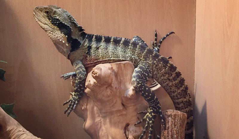 Lizard and Reptiles, Waterways Garden Center