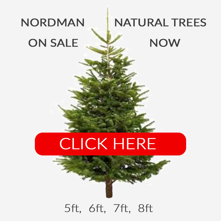 Natural Christmas trees
