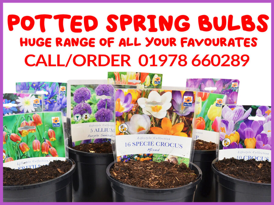 Spring bulbs promotion