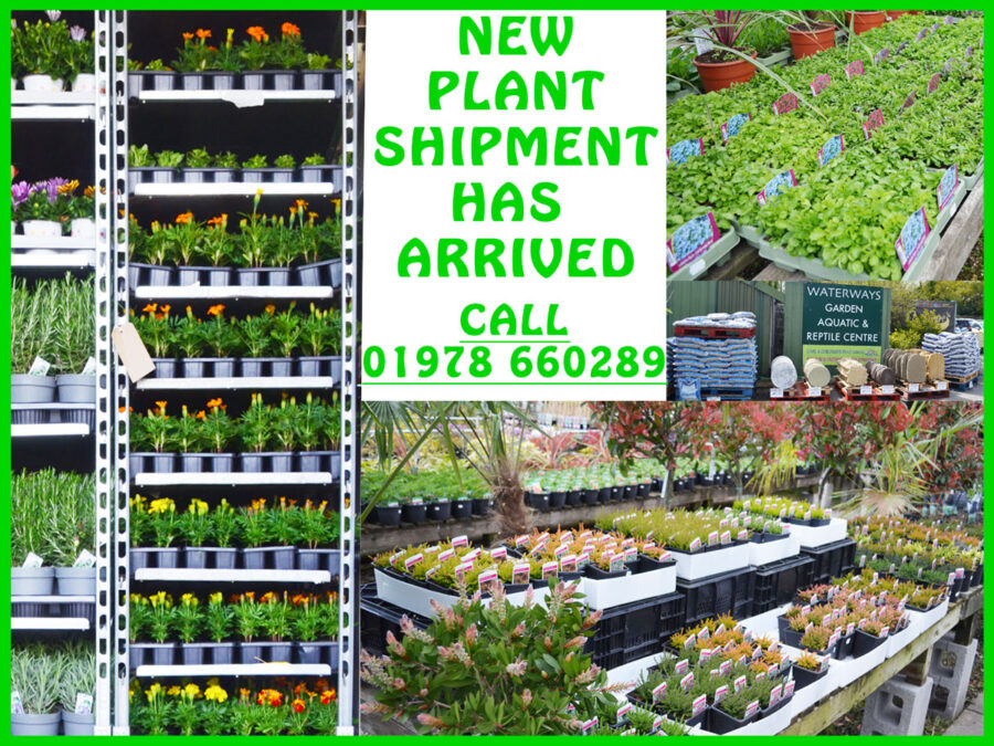 New plants at garden centre