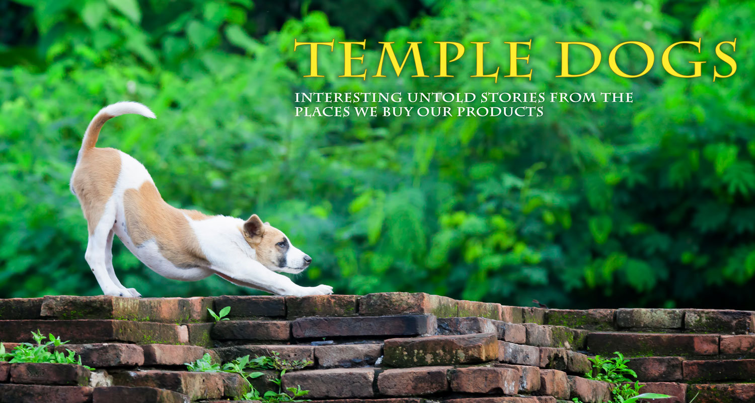 Temple dogs blog