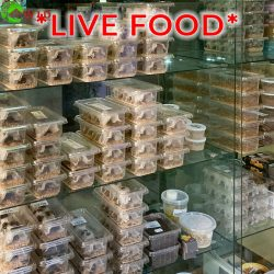 live food for reptiles