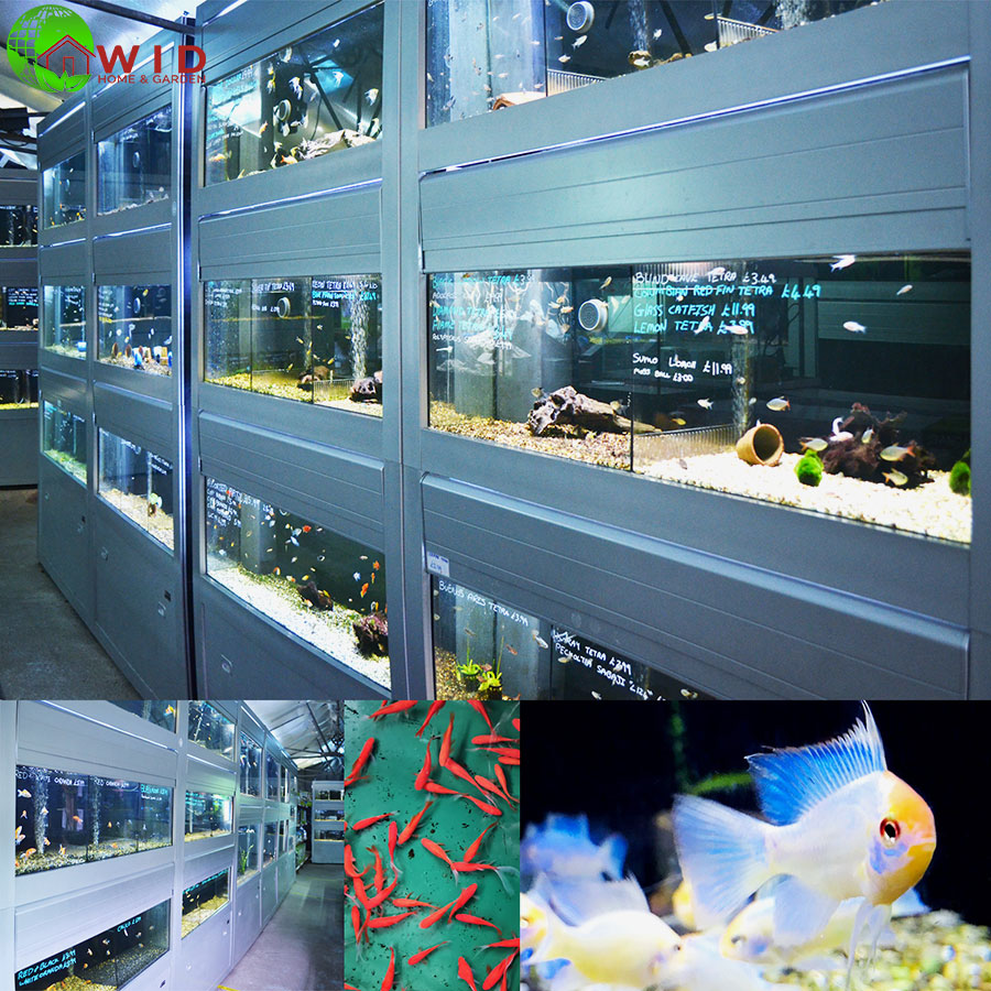 tropicial and cold water fish supplies UK