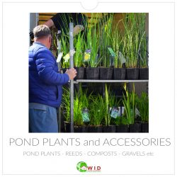 Pond plants and accessories