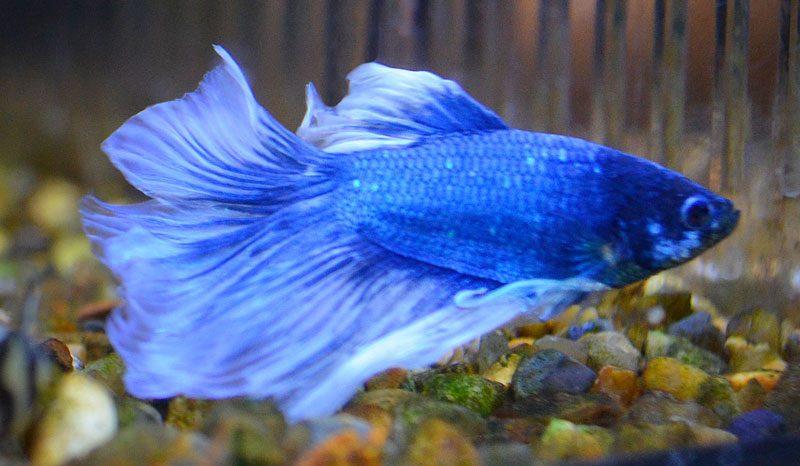 Tropical fish UK