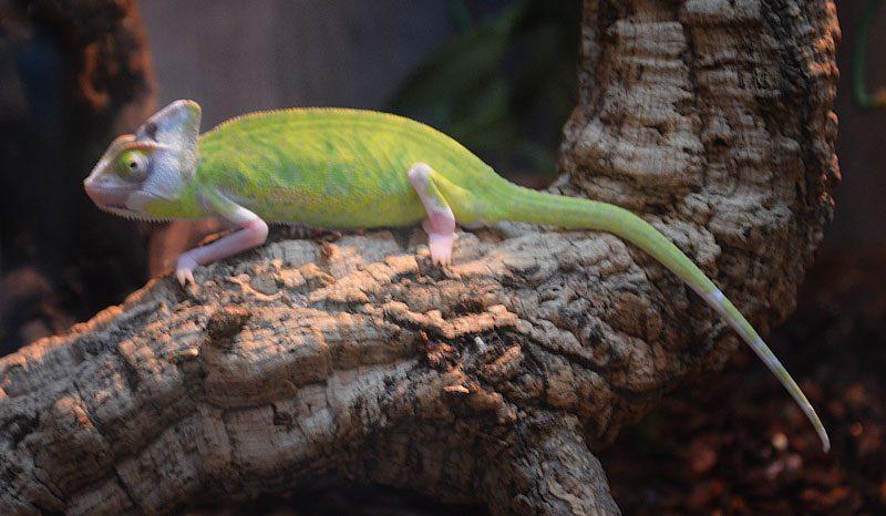 Reptile centre UK